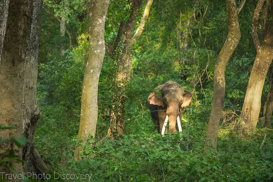 Elephants at Chitwan National Park
