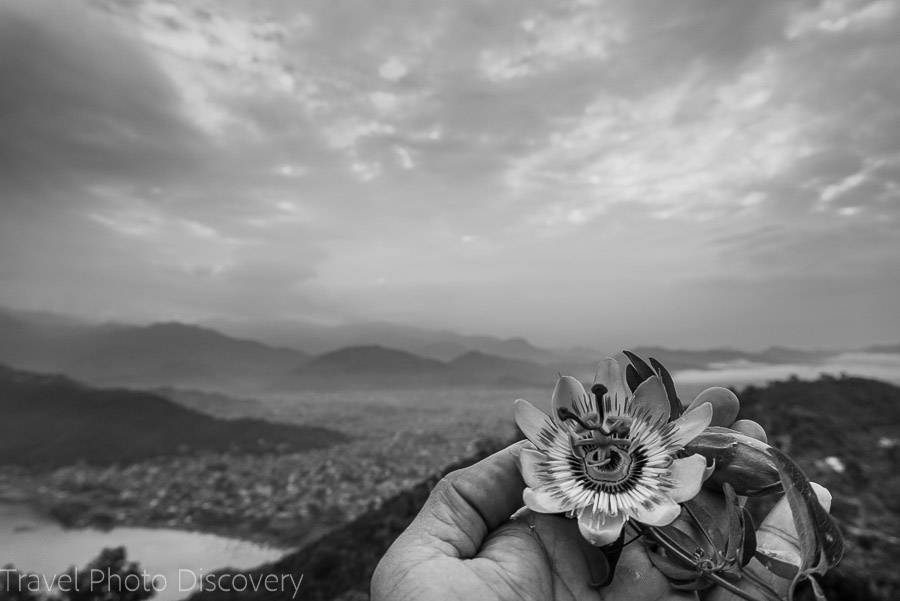 Enjoying the flowers views of Pokhara from above