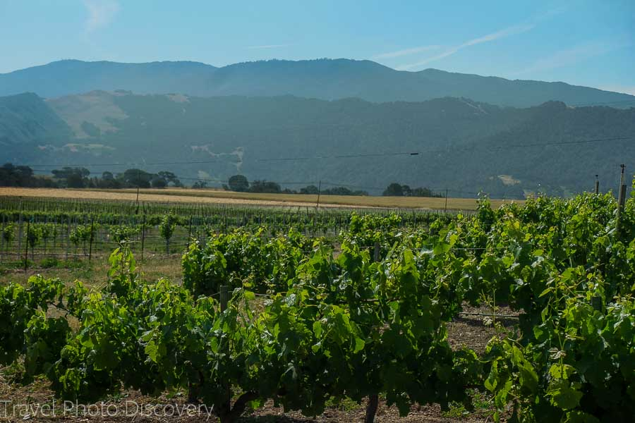 Wine country vineyards around Santa Barbara county