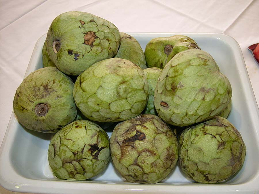 Tasty tropical Cherimoya fruit