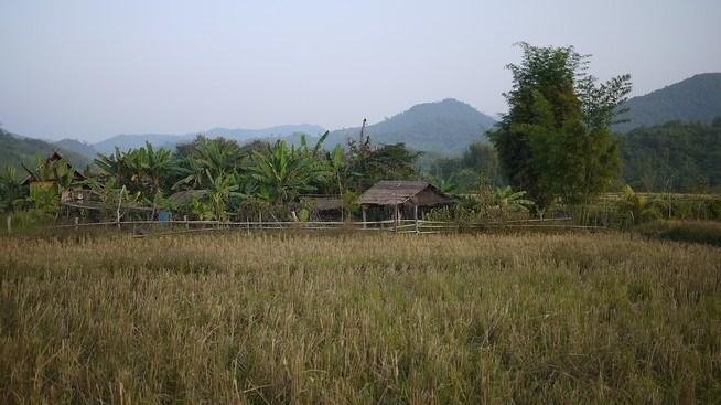 rice paddy laos