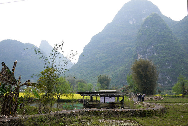Rice paddies, karst rocks, Yangshuo China