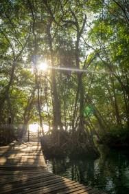mangroves celestun mexico