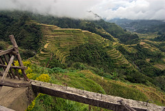Rice Terraces in fog