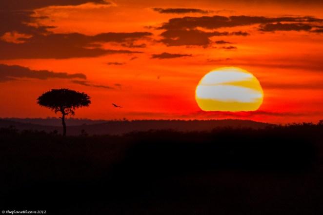 sunset africa savanna