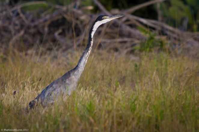 wildlife photos south africa