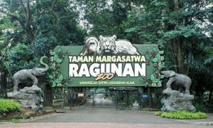 Taman Margasatwa Ragunan Jakarta - Icha Trans - Taman Margasatwa Ragunan Jakarta