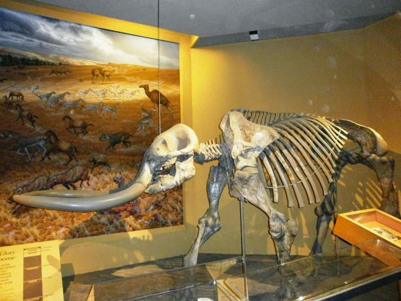 Museus de História Natural