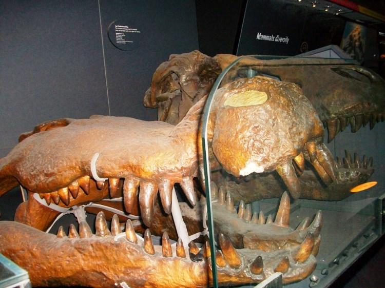 Londres À  descoberta dos Museus de História Natural
