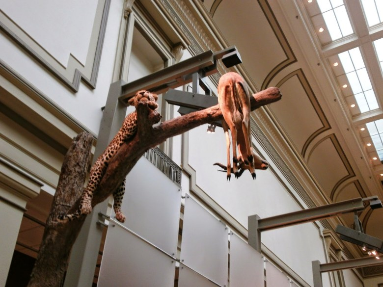 À  descoberta dos Museus de História Natural