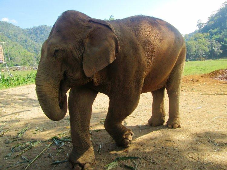 elephant-nature-park2 Elefantes Tailândia