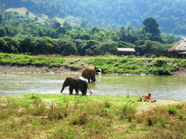 elephant-nature-park3