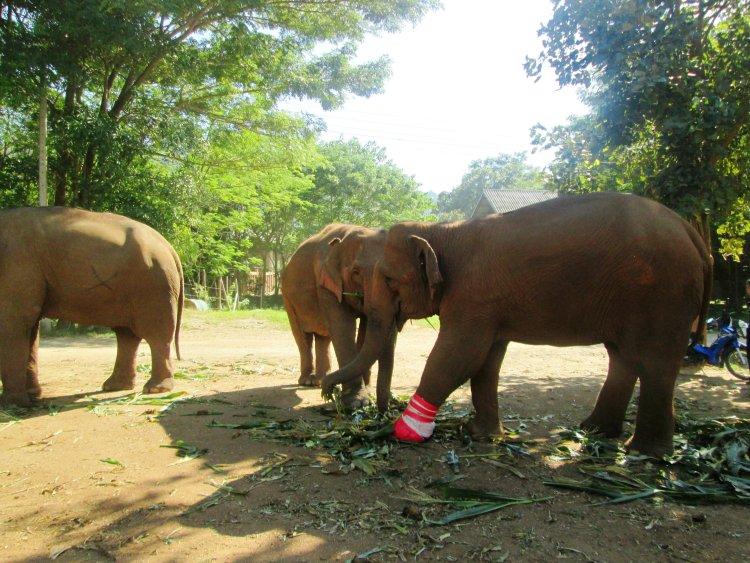 elephant-nature-park6