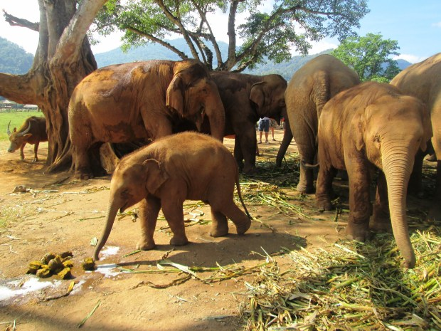 elephant-nature-park8