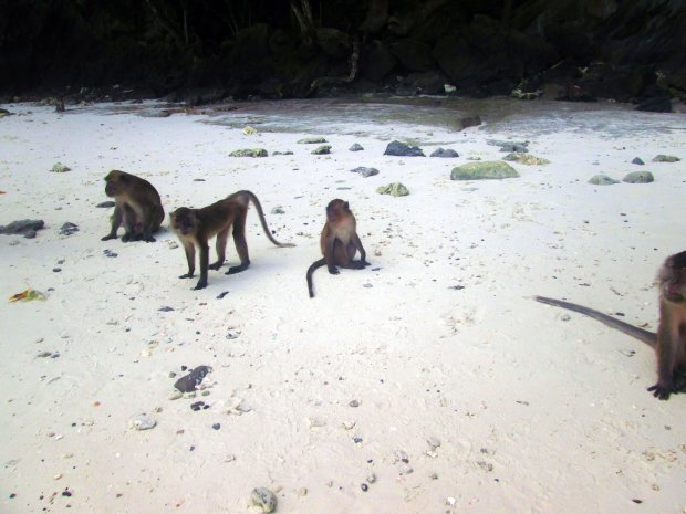 phi-phi-don-monkey-beach-2