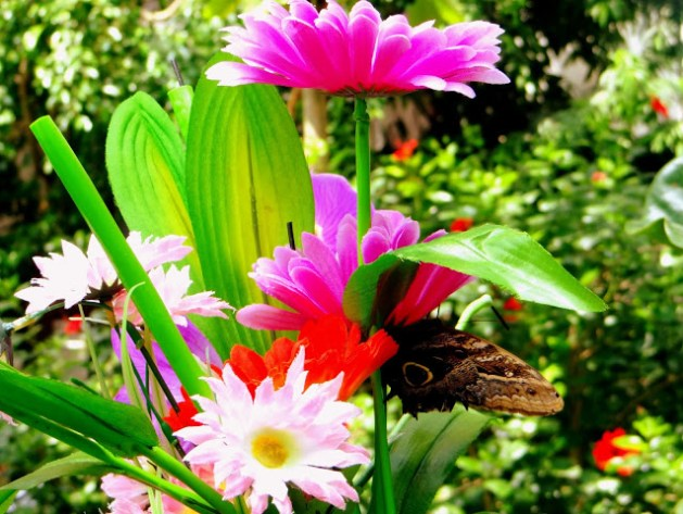 The butterfly house in Vienna, Austria, Travel Realizations