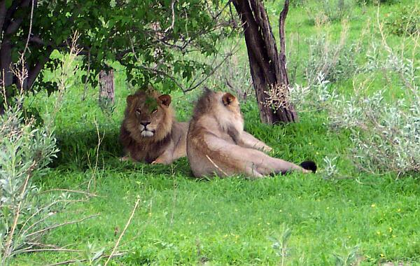 African Wildlife Safari Options for 2021