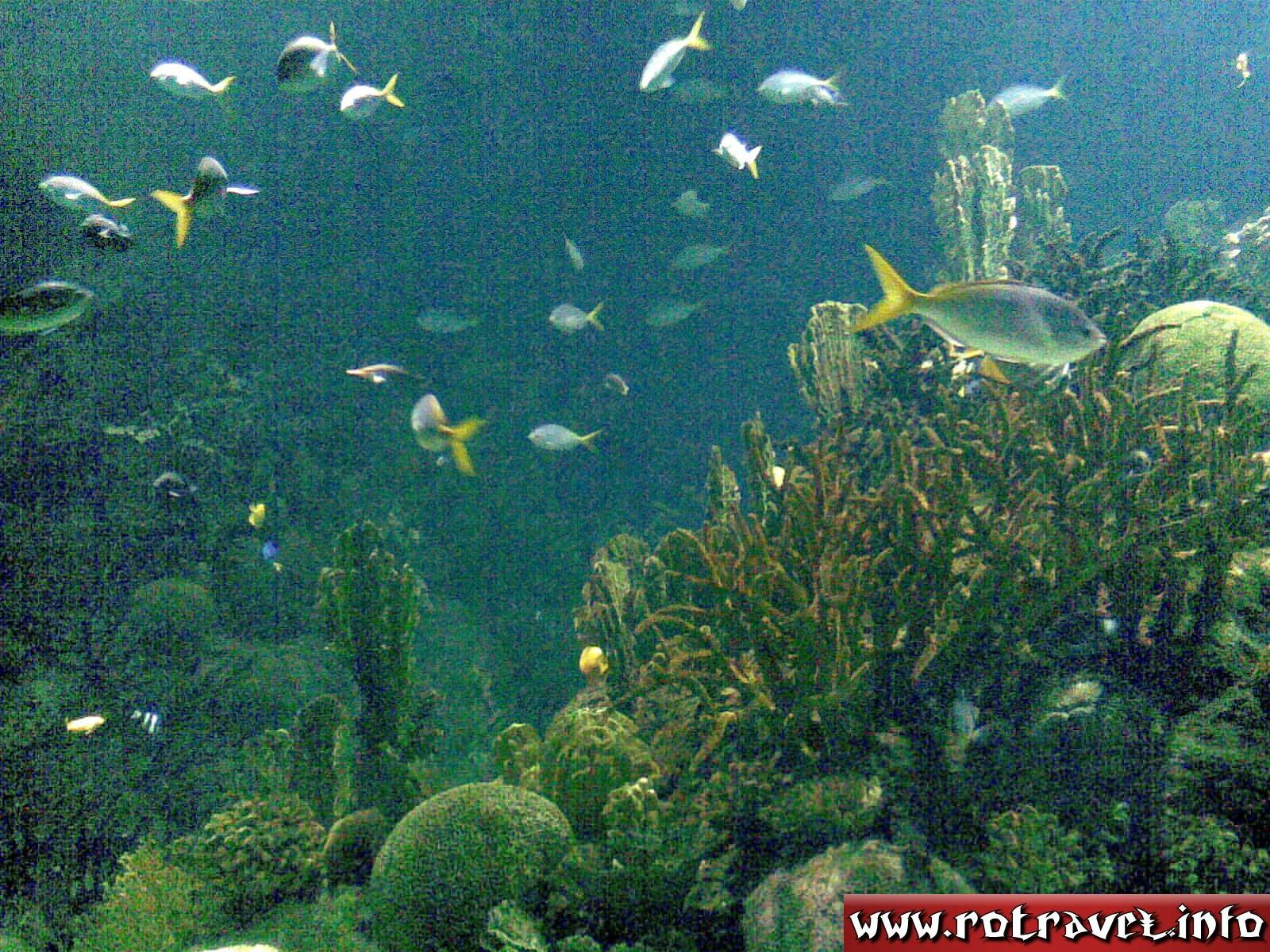 Fishes into the Temperate and Tropical zone