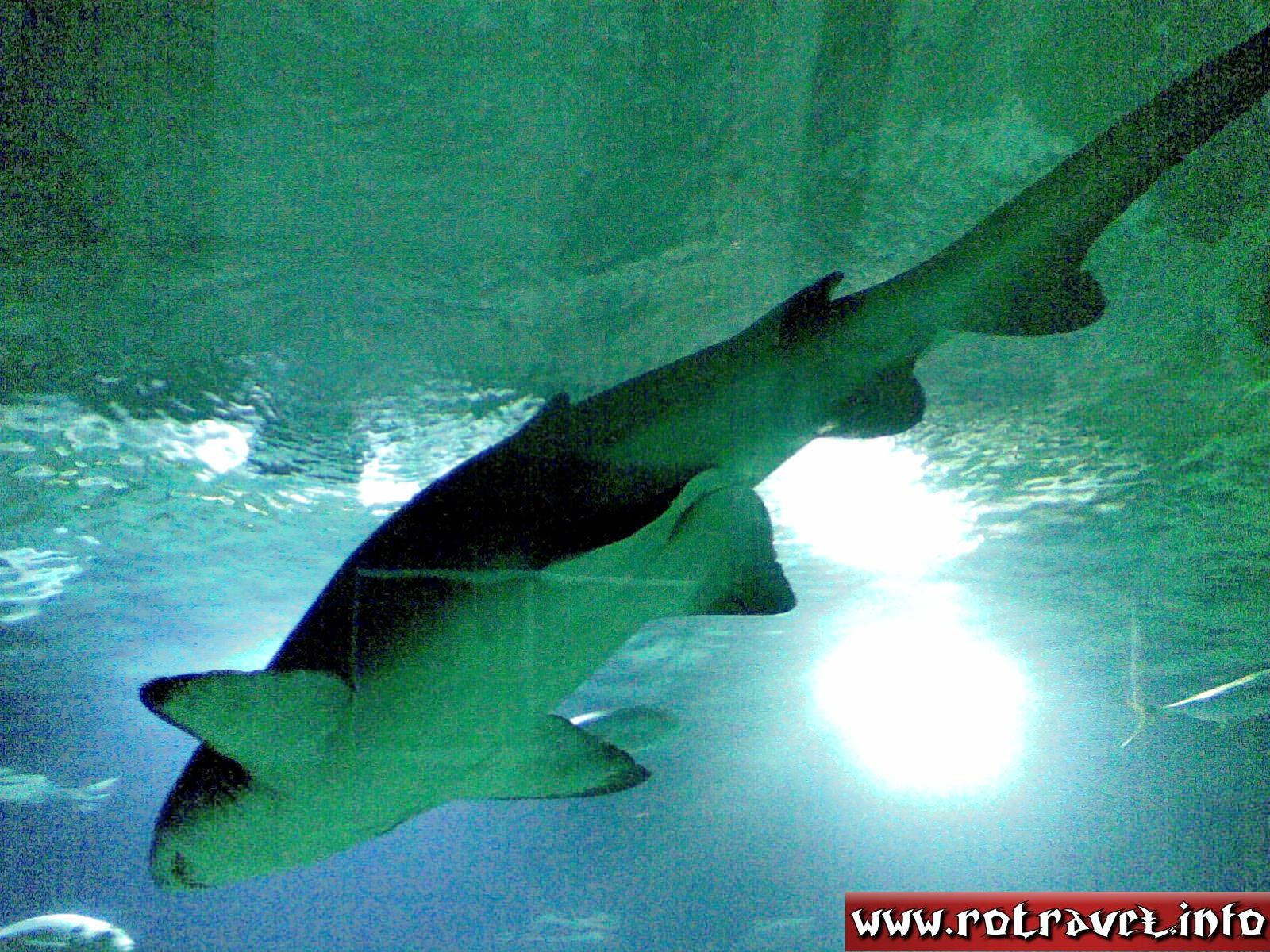 Shark in the Ocean zone of the complex