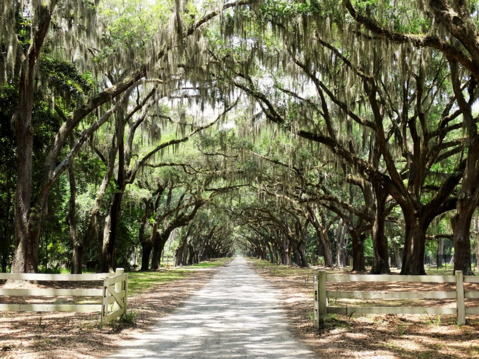 Oak Alley Wormsloe Plantation Savannah