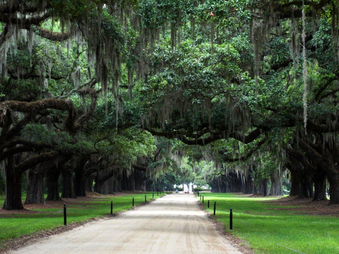 Avenue of Oaks - Boone Hall Plantation - Fackeln im Sturm