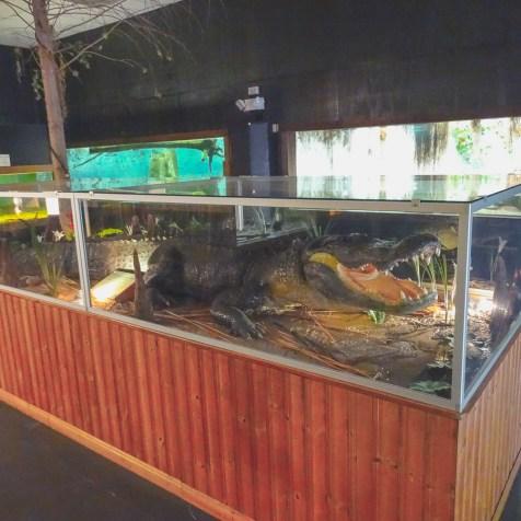 Alligator ausgestellt im Reptilienhaus