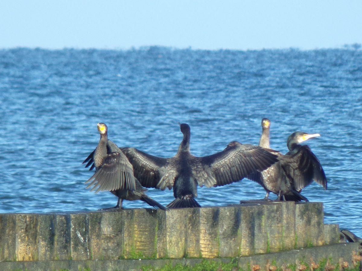 ptaki nad baltykiem