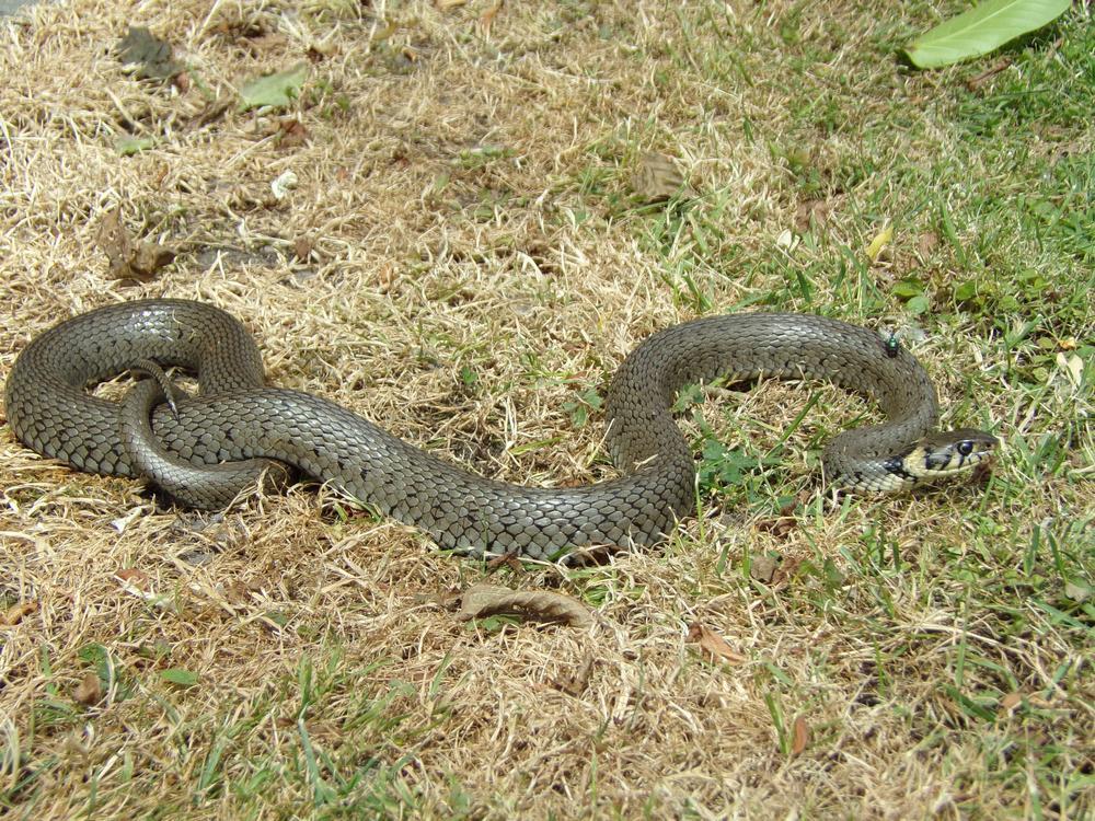 wąż-w-ogrodzie