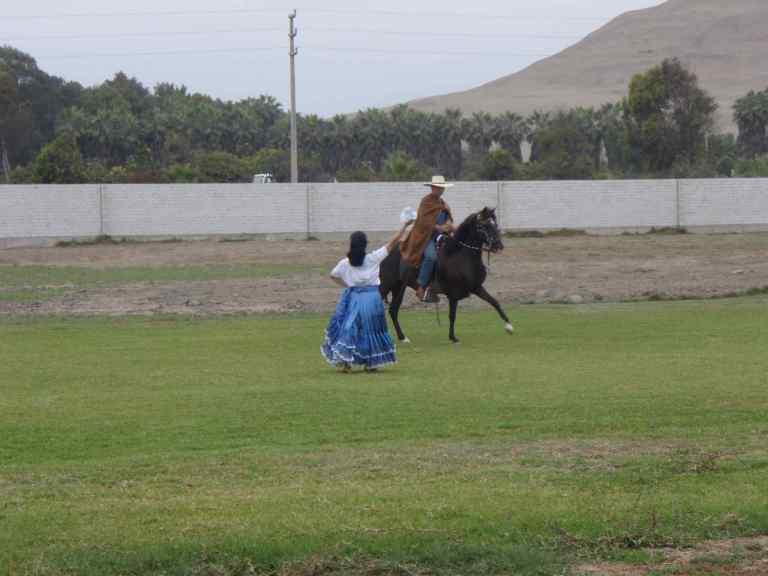 Paso horses - 4