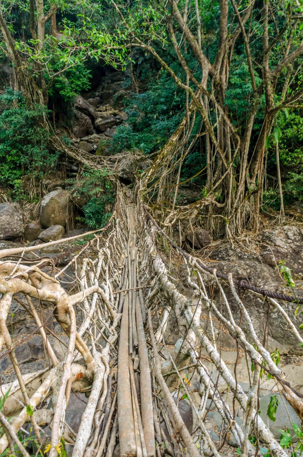 Nongriat Living Root Bridge