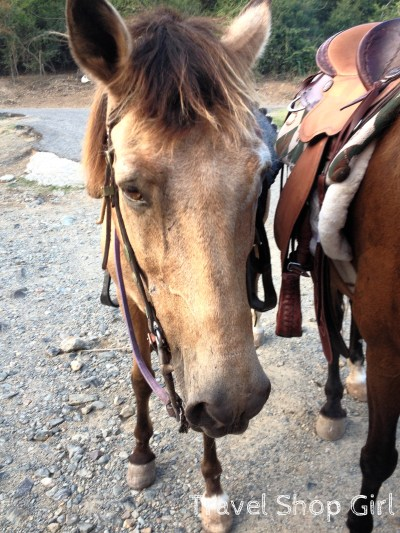 Houdini - my equine boyfriend. What an amazing horse!