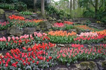 Tulip-Time-Rhine-7