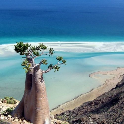 Coast of Socotra Island | Yemen