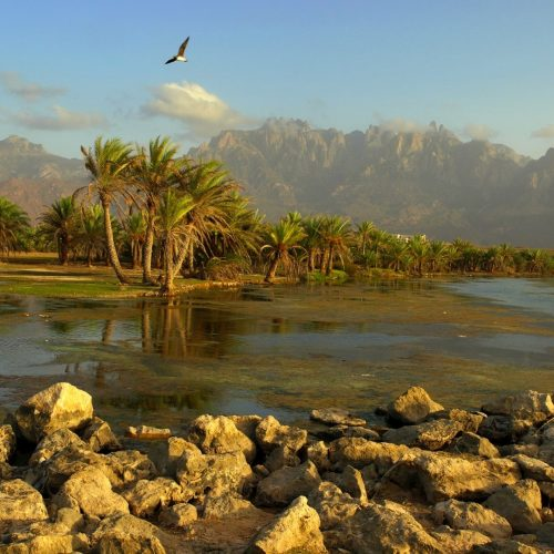 Socotra Island | Yemen
