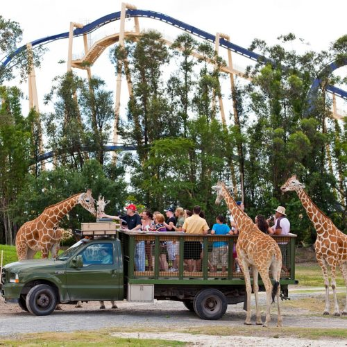 Animal Kingdom - Disney - Giraffe Feeding - Orlando - Theme Park - Florida