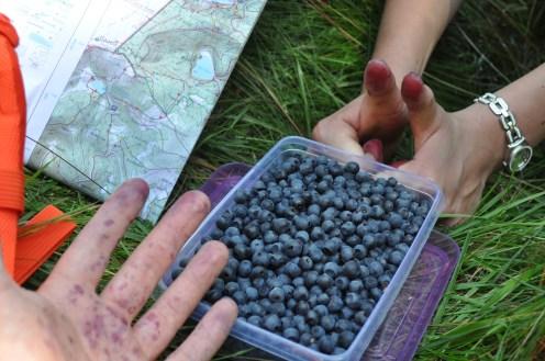 Vosges, Blueberries, Hikers