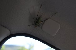A hitchhiker.