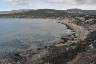 Lara beach, turtles