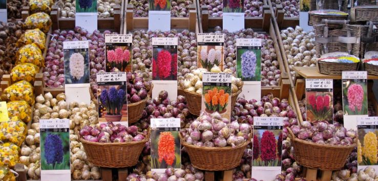 World Markets-Amsterdam-Flower Bulbs