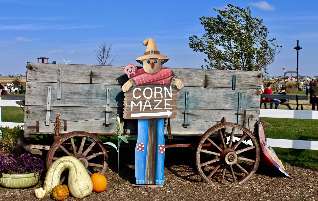 Pumpkin patches and corn mazes: Ready for an adventure? Try to find your way along the corn stalks. (Photo by Suzanne Ball. All rights reserved.)