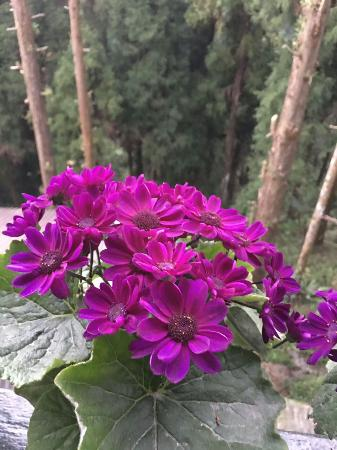 Image result for Shingba Rhododendron Sanctuary tripadvisor images