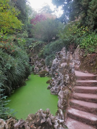 Organic stuff growing on water in Quinta da Regaleira