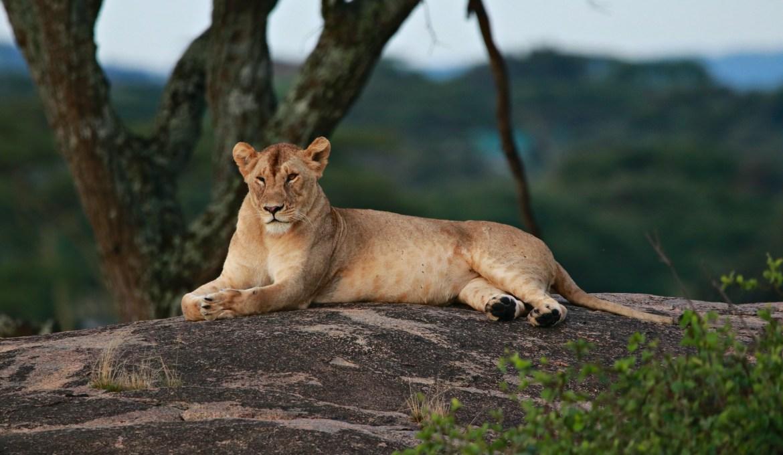Serengeti und Ngorongoro Krater Schutzgebiet