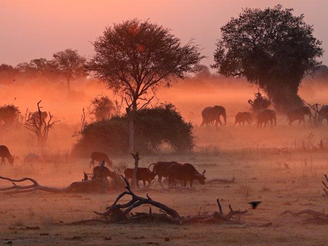 Botswana – Safari im Moremi NP, der Khwai Region und dem Chobe NP