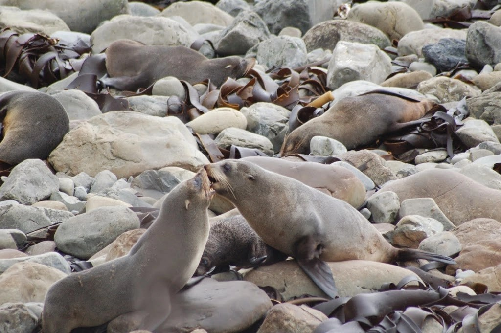 Ohau Seal Kiss - New Zealand - Itinerary Planner