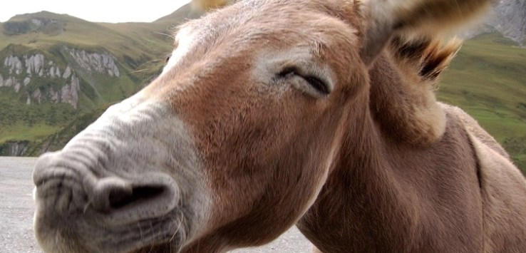 Donkey Picture