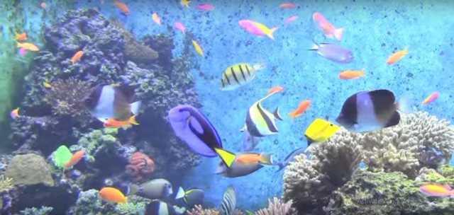SEA Aquarium Singapura