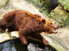 Kebun Binatang Bandung - Bandung Zoo