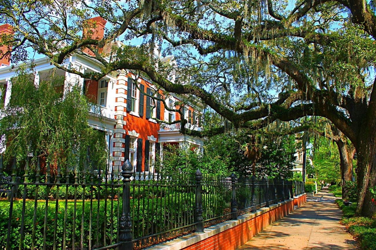 Savannah: Ready for its Close-Up
