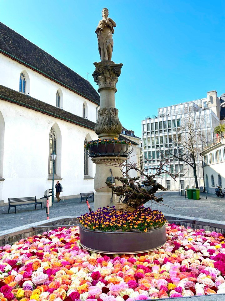 The Fabulous Rose Filled Fountains Of Zurich Switzerland